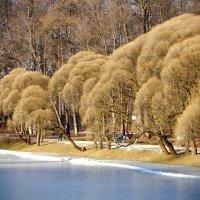 У озера (зима) :: Viacheslav Birukov