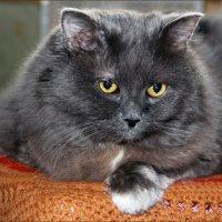 Кошка Дуся. :: Роланд Дубровский