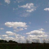 Плывут по небу облака, я слышу голос твой издалека... :: Ольга Кривых