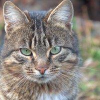 Весенний Котик :: Вика К.