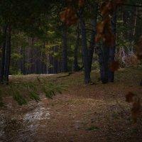 В тёмном-тёмном лесу :: Владимир ЯЩУК