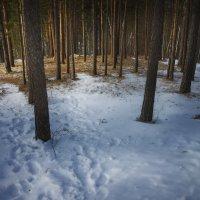 Последний день зимы :: Александр Иванов