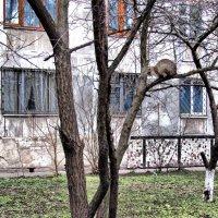Весна... Коты прилетели... :: Алла Рыженко
