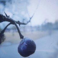 ягодки :: Veronika Lysenko