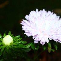 Белые цветы :: Alex