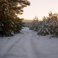 прогулка по лесу :: Алексей Мусатов