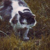 Матерый охотник :: Yana Fizazi