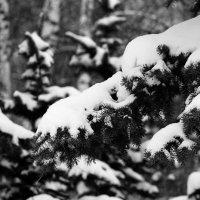 Зима :: Rustam ZH