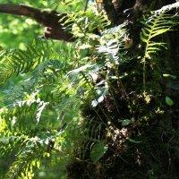 И на деревьях растет папоротник :: Андрей Воробьев
