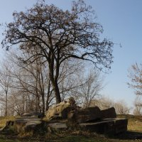 и на камнях растут деревья :: Сергей Зенцев