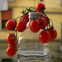 Не хочу быть салатом, хочу украшать мир...)) :: ФотоЛюбка *