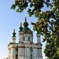 киевские каштаны :: konsullll