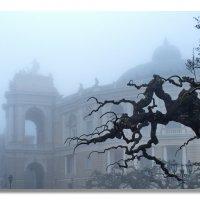 оперный в тумане :: Александр Стаховский