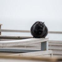 Пляжный кот :: Сергей Волков