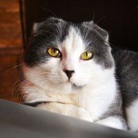 cat :: Диана Василенко