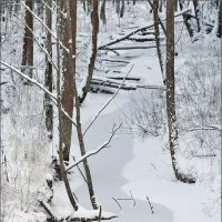 Лесной ручей :: Юрий Савинский