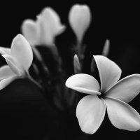 White flowers :: Vic Noon