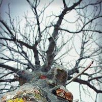 дерево во льду :: Ирина Петрушкова