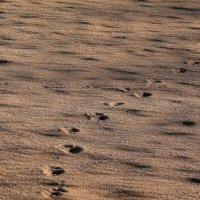 в песках все зыбко :: gribushko грибушко Николай