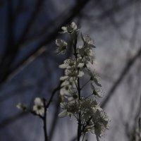 Добро пожаловать весна :: İsmail Arda arda