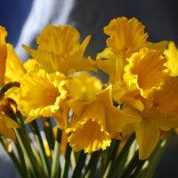 Весна :: Марина Баукина