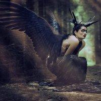 Птица :: Мария Сендерова