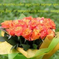 Для милых дам!!! :: Евгеша Сафронова