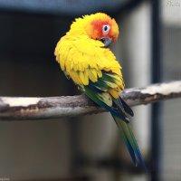 Parrot :: Виктор Мушкарин (thepaparazzo)