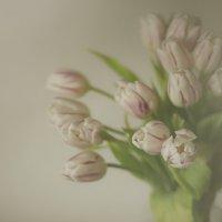 tulips :: Юлия Тишина