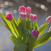 весне пою :: liudmila drake