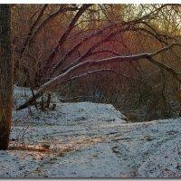 вечер в лесу :: герасим свистоплясов