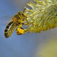первая  пыльца :: Nelly G