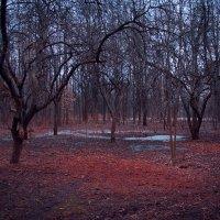 Весна в России настолько сурова... :: Мария Бродская (Гурьянова)