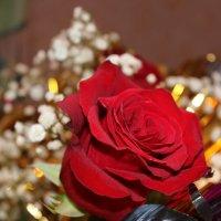 Розы на 8е марта :: Надежда Молчанова