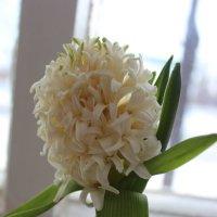 Весна на подоконнике :: Надежда Молчанова