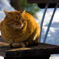 Солнечный кот :: Игорь Машкин