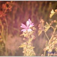 Цветок :: Татьяна Кудельская