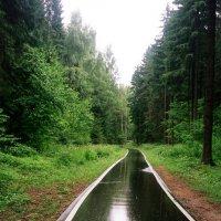После дождя :: Сергей Карцев