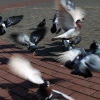 птички :: Виктория Зомова