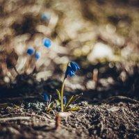 Весна пришла :: Alina Grib