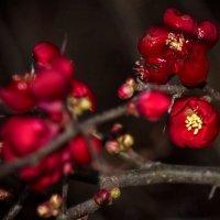 Аленький цветочек :: Svetlana Sneg