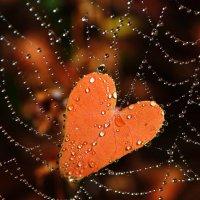 Осенний лист попался в сеть, на сердце глупое похожий :: Леся Вишня