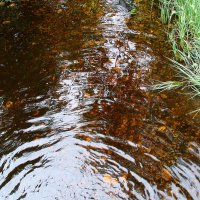 Речка,солнце и трава :: Владимир Гилясев