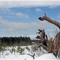 лесной житель... :: Надежда Шемякина