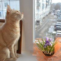 и к нам весна идет... :: Елена Третьякова