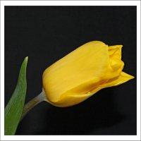 один жёлтый :: Наталья Золотых-Сибирская