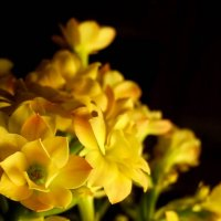 Yellow4 :: Алёна Бодрова