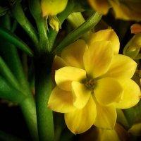 Yellow3 :: Алёна Бодрова