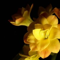 Yellow2 :: Алёна Бодрова