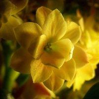 Yellow1 :: Алёна Бодрова
